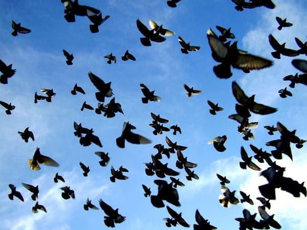 Allontanamento-uccelli-tetti-bologna