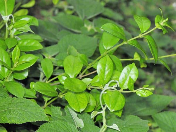 Caduta-delle-foglie