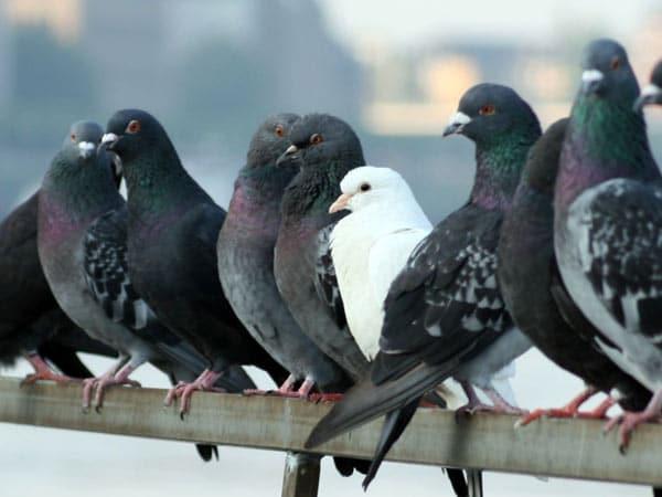 Ditte-installazione-dissuasori-piccioni
