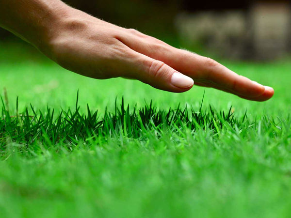 Giardiniere-taglio-erba-castenaso