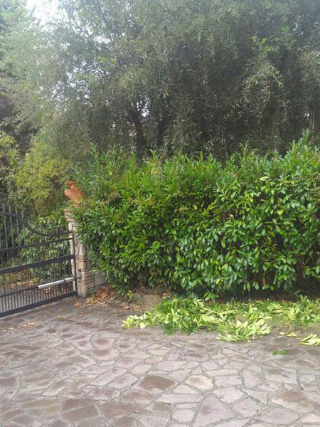 Potatura-siepi-alte-bologna-castenaso