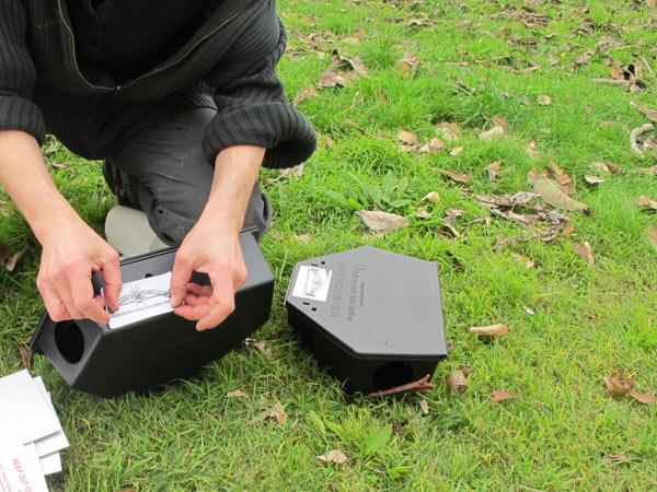 Disinfestazione topi bologna castenaso preventivi derattizzazione eliminare roditori - Eliminare topi dal giardino ...
