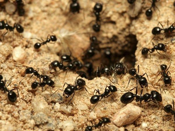 Servizio-disinfestazione-insetti-domestici-ragni-bologna