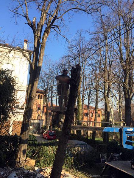 Taglio-rami-alberi-alto-fusto-san-lazzaro-di-savena