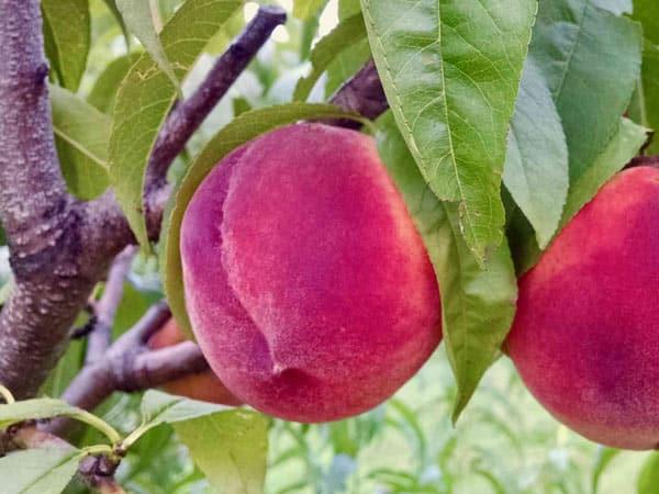 Tariffe-trattamenti-fitosanitari-casalecchio-di-reno