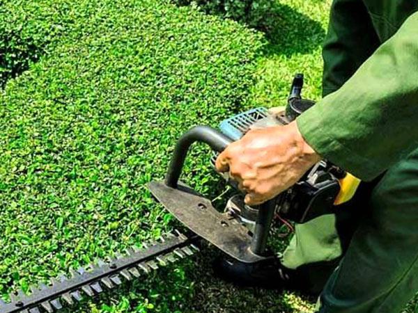 potatura-e-sistemazione-piante-giardino-bologna
