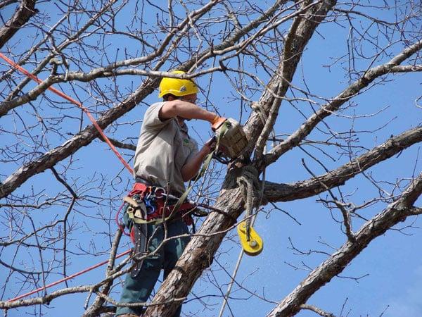 preventivo-potatura-alberi-cortili-bologna